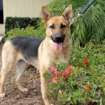 Elsie Adopted!
