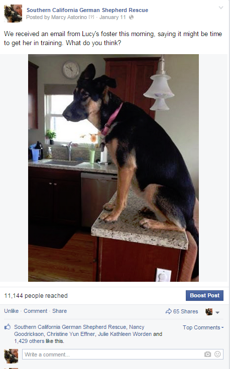 lucy2014_4_facebook