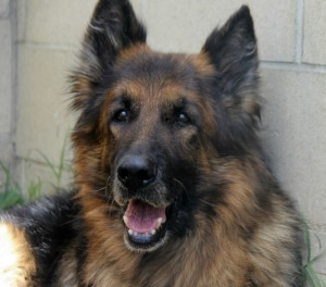 Romeo, a beautiful senior with a hip out of joint - for years.