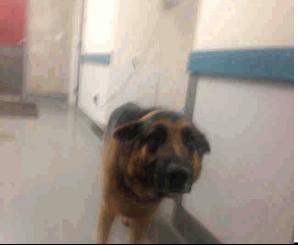 Arrival at the shelter; a sad, sad boy.