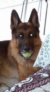 Herman with tennis ball
