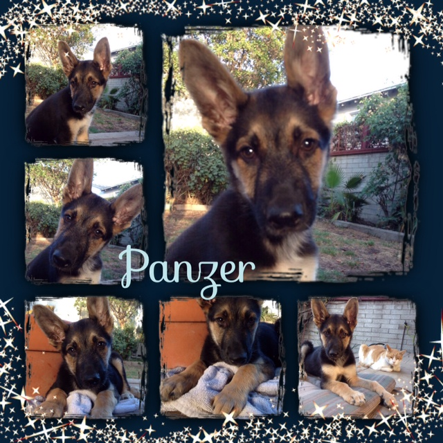 Panzer's foster mommy loved him dearly and worked so hard to help him.
