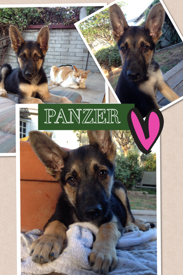 Panzer had an ultrasound.