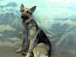 Kean's mom, Anke, at the shelter before rescue.