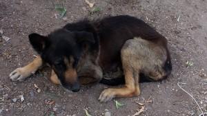 Max in Tijuana