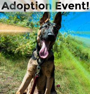 CANCELLED - Adoption Event -- July 9, 2017 @ Petco Clairemont Mesa | San Diego | California | United States