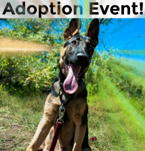 Adoption Event March 18, 2017!