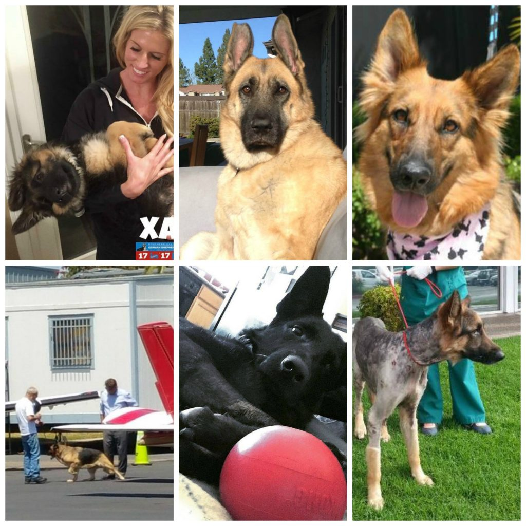 Xander (blind); Vita (nearly died from neglect); Farrah (hit by car); Amelia (a senior - arrived from a far away shelter thanks to Pilots & Paws; Grace (hit by car, broken pelvis); and Zeus (skin infection)