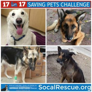 Saving Pets Challenge Online Fundraising Event!  Help us Win! @ Online Only