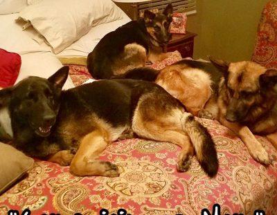 Nala is adopted!