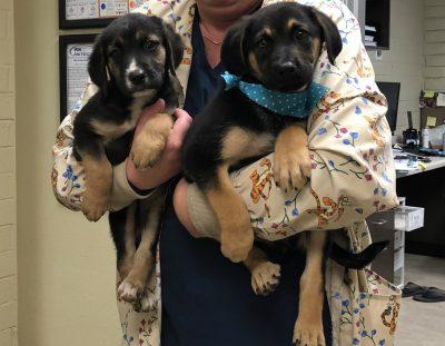Dixie & Mya Rescued!