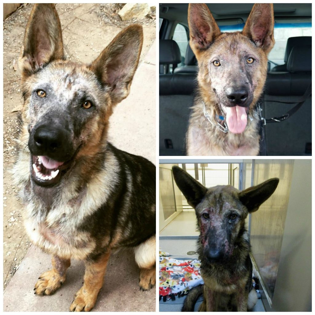 Rocky at the shelter before rescue, and just five days later.