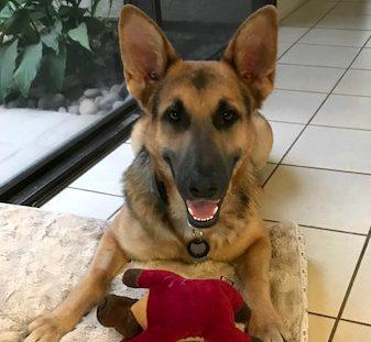 Hunter Adopted!