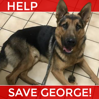 George Plea