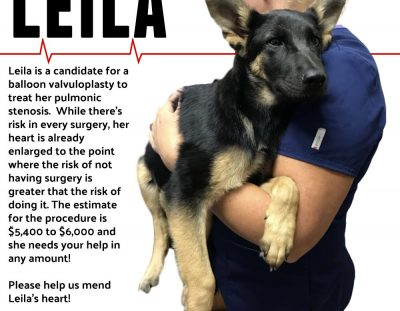 Help us save Leila's life!