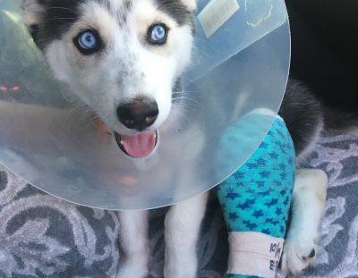 Skye Adopted!